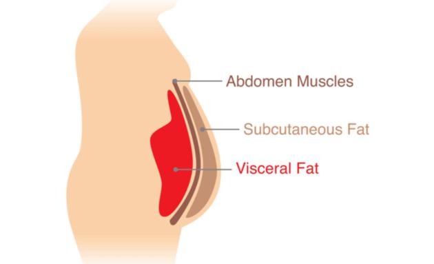 Visceral-Fat-Diagram