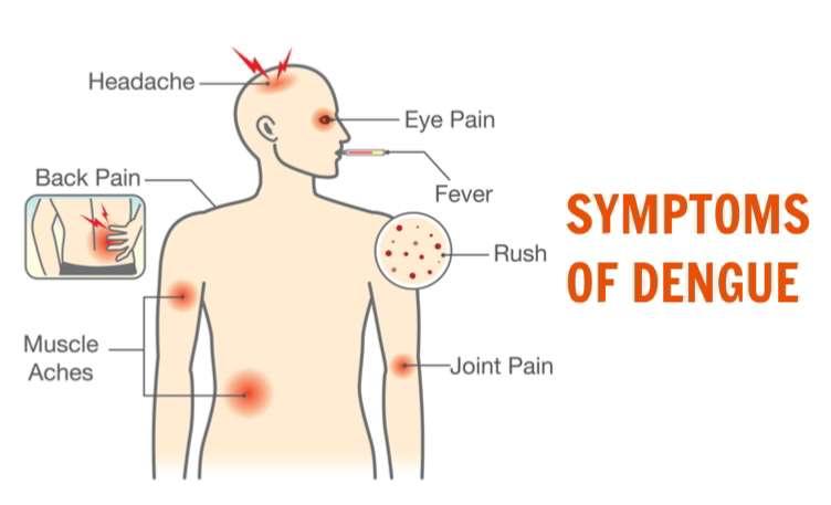 Dengue-Symptoms-2-2