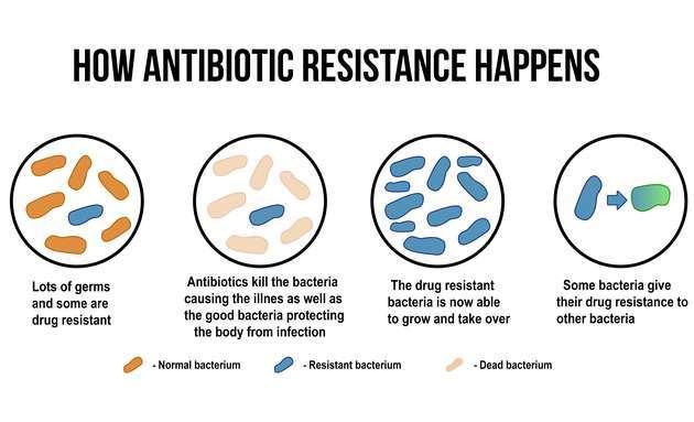 How-antibiotic-resistance-happens
