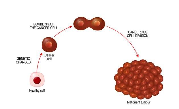 How-cancer-cells-grow